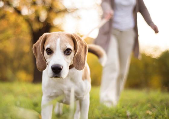 Koks šuo jums labiausiai tinka pagal Zodiako ženklą?